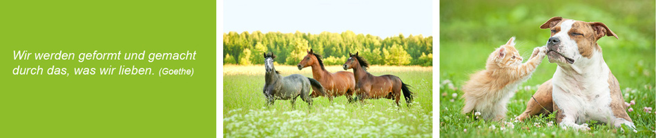 Tiertherapie Renningen Akkupunktur