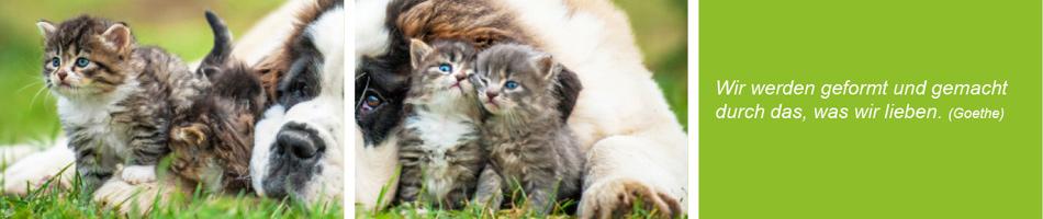 Tiertherapie Renningen Verhalten